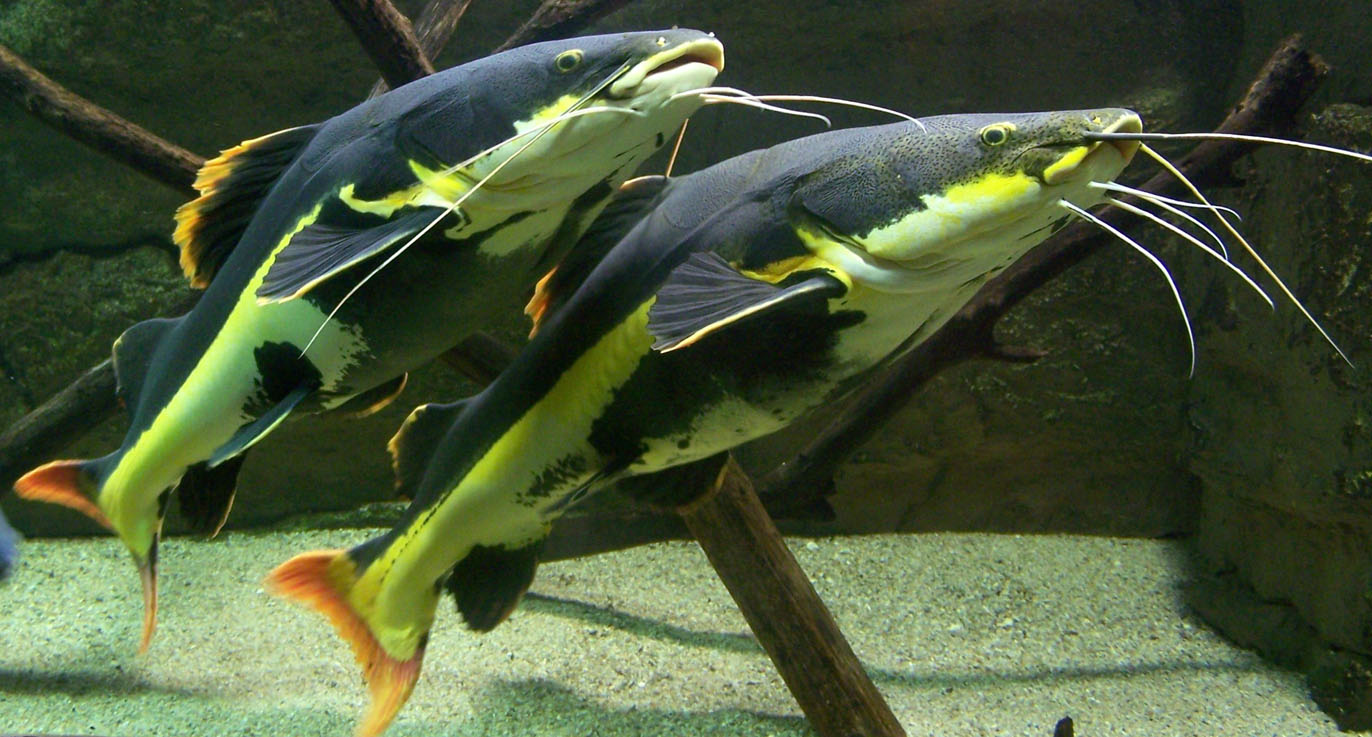 L'aquarium des tropiques à Allex