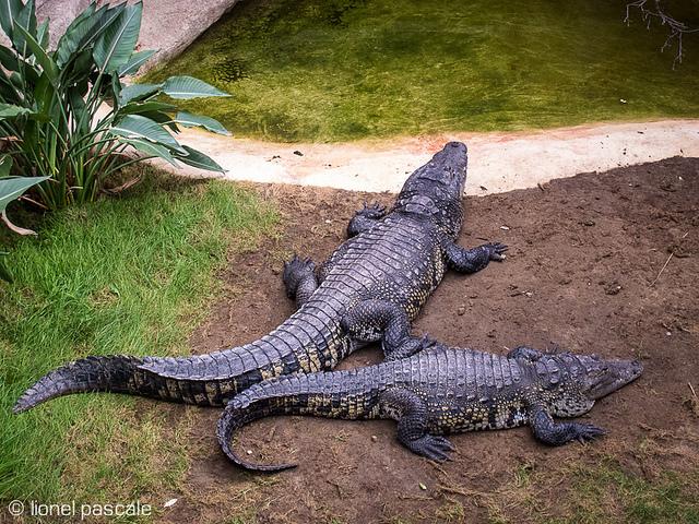 Vacances d'hiver à la Ferme aux crocodiles