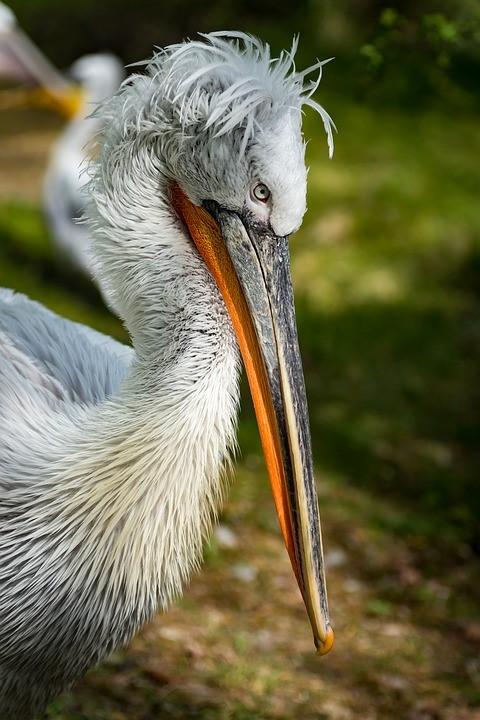 Le Zoo d'Upie œuvre pour la Conservation