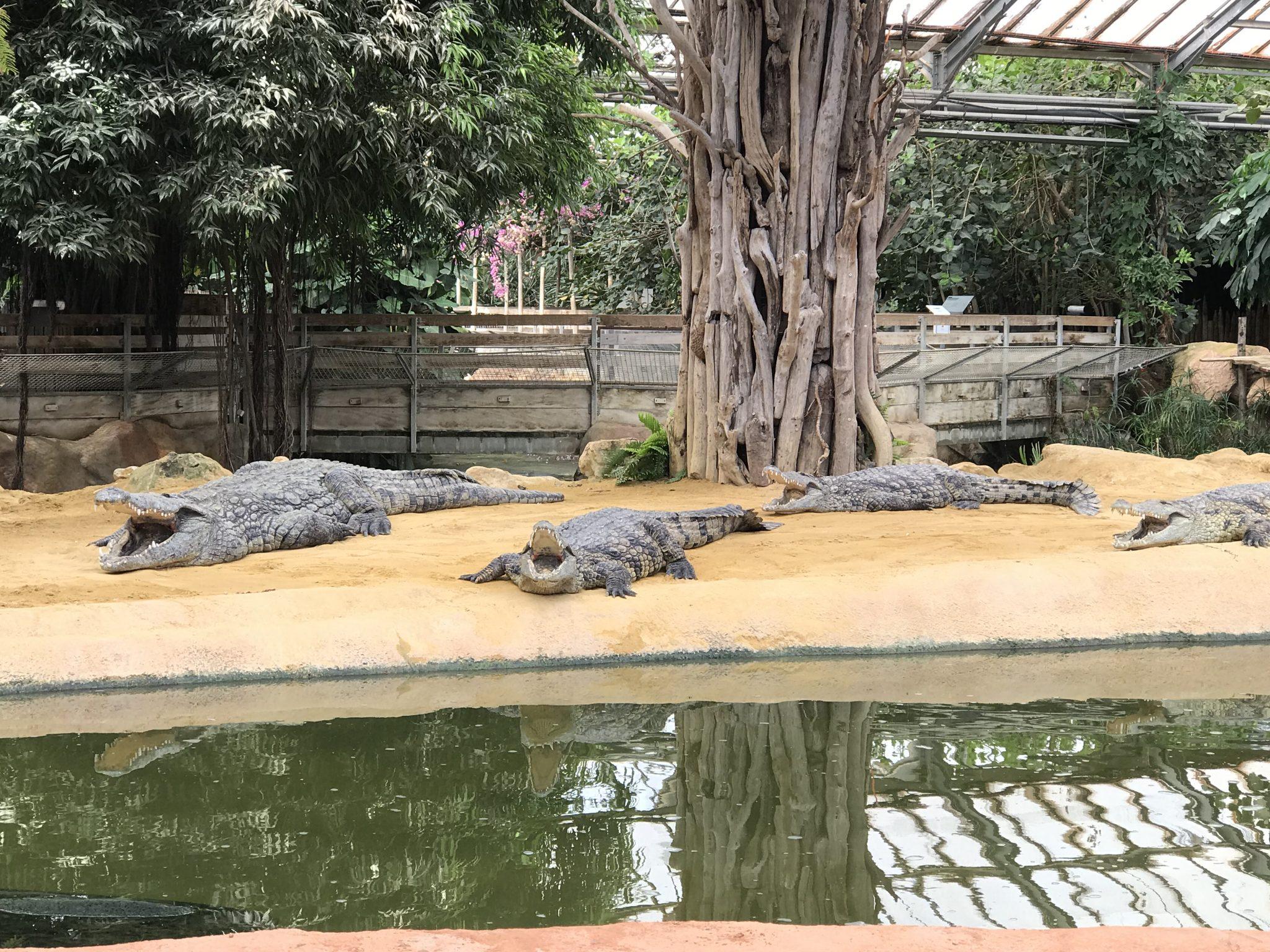 La Ferme aux Crocodiles se met aux couleurs d'Halloween