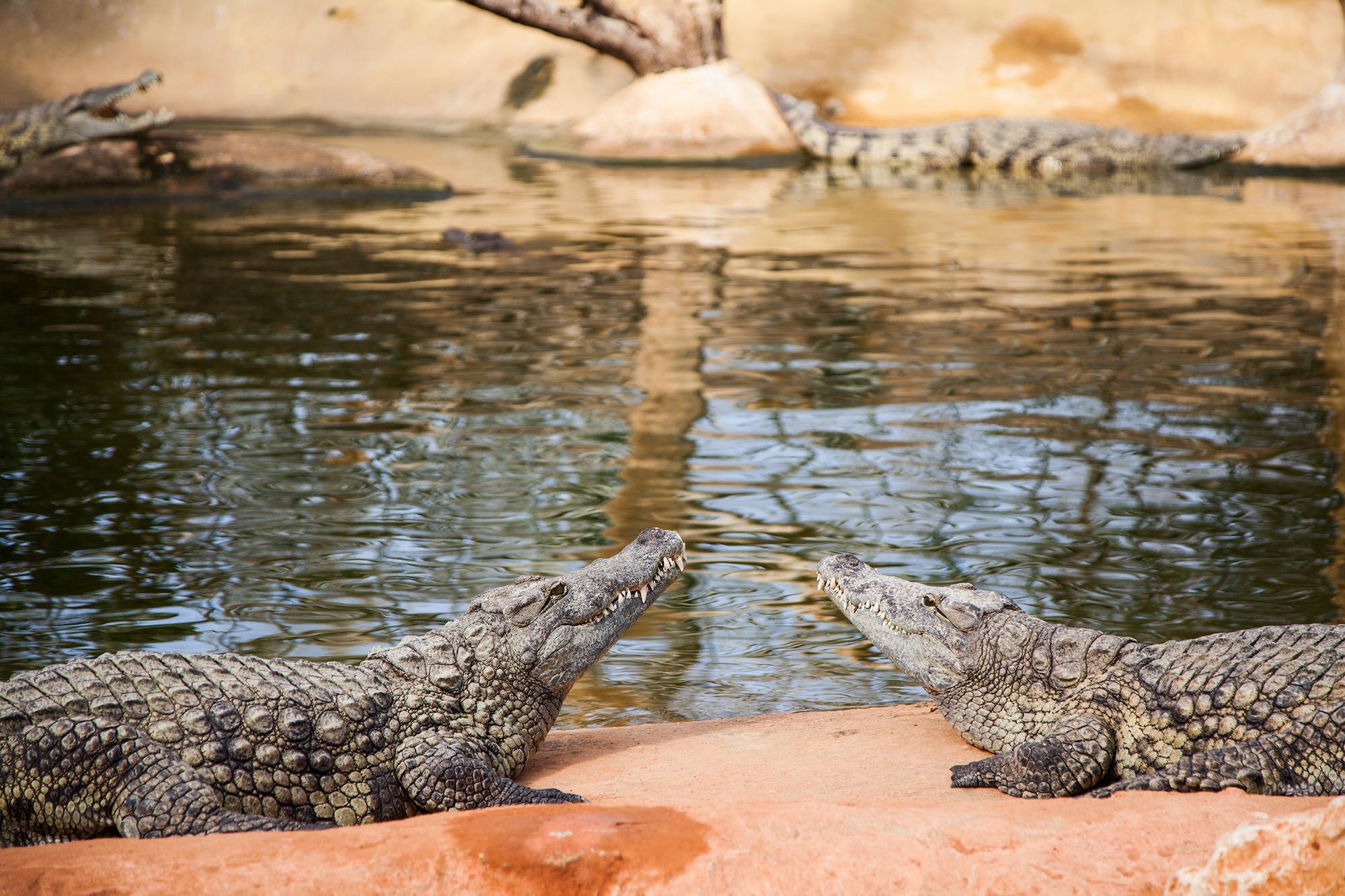 Que faire pendant les vacances de février ? Idée n°5 : rendre visite à nos amis crocodiles à Pierrelatte