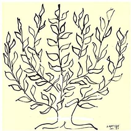 le platane d'Henri Matisse